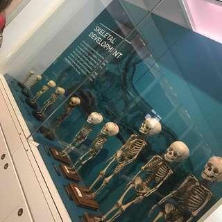 National Museum of Health & Medicine