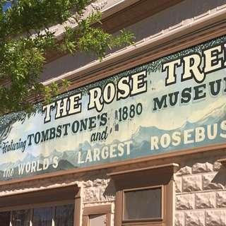 Rose Tree Muesum