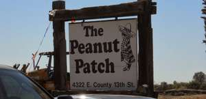 The Peanut Patch