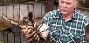 Lobster Ponds