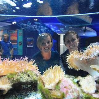 Solitary Islands Aquarium