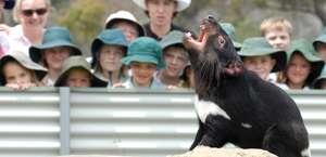 Tasmania Zoo
