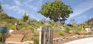University of California Santa Cruz Arboretum