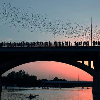 Bats Under the Congress Avenue Bridge