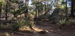 Fatman's Loop Trail