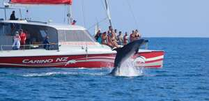 Carino Sailing & Dolphin charters