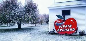 Pippin Apple Orchard