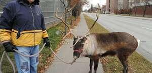 Star the Reindeer's Pen
