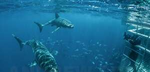 Rodney Fox Shark Expeditions