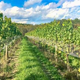 Briar Valley Vineyards & Winery