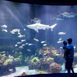 Wonders of Wildlife Museum & Aquarium