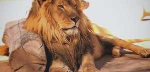 The Lion Habitat Ranch