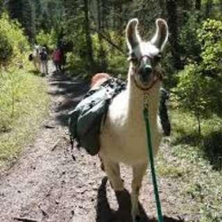 Wild Earth Llama Adventures