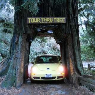 Tour-Thru Tree