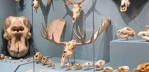 Biodiversity Institute & Natural History Museum