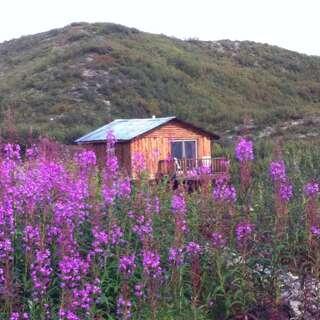 Denali Highway Cabins & Paxson Alpine Tours