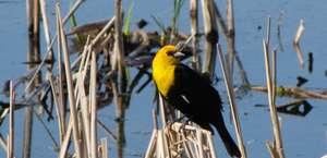 Canfield Lake National Wildlife Refuge