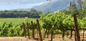 Chappellet Vineyard and Winery