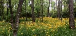 Aspen Grove Park