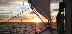 Scallywag Sailing Tours
