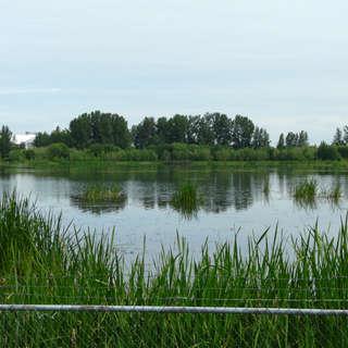 Vanport Wetlands