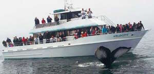 Stagnaro Fishing And Whale Watching