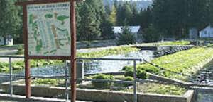 Mount Shasta Fish Hatchery
