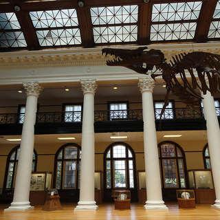 Alabama Museum of Natural History