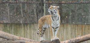 Binghamton Zoo