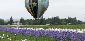 Balloon Flying Service of Oregon