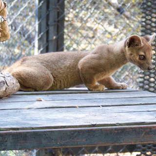 Chahinkapa Zoo