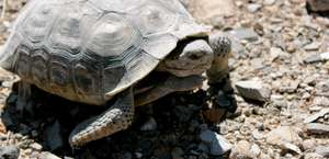 Desert Tortoise Natural Area