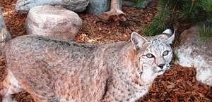 Alamogordo Zoo