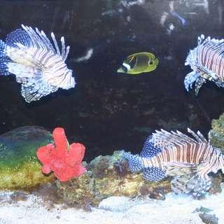 Idaho Aquarium
