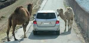 Wild Animal Safari