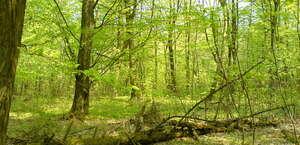 Wallace Hartman Nature Preserve
