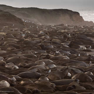 Friends of the Elephant Seal Rookery