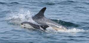 Granite State Whale Watch