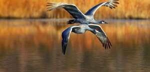Lambs Lake National Wildlife Refuge