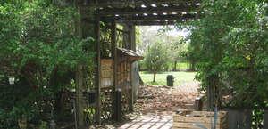 USF Botanical Garden