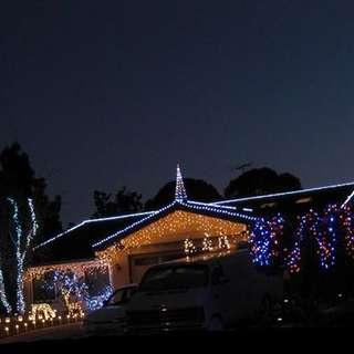 Bluebonnet Lights
