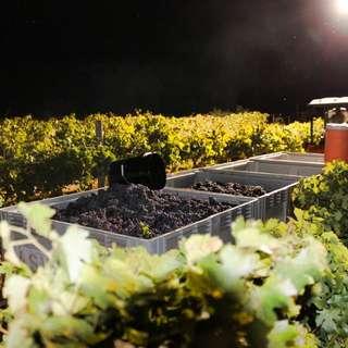 Arizona Stronghold Vineyards