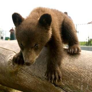 Bear Country U.S.A