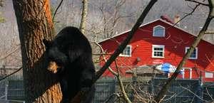 The Western North Carolina Nature Center