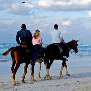 Chenois Creek Horse Riding