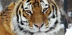 Henry Vilas Park Zoological Society