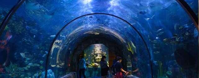 Häagen-Dazs Ice Cream - Aquarium of the Americas
