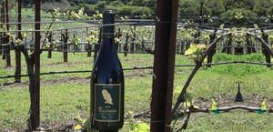 Kastania Vineyards
