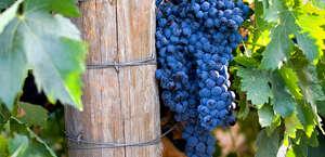 Golden Valley Grape Juice & Wine