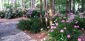 The South Carolina Botanical Garden